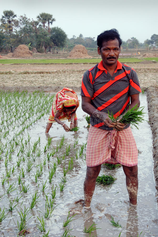 Agriculture indienne photo stock