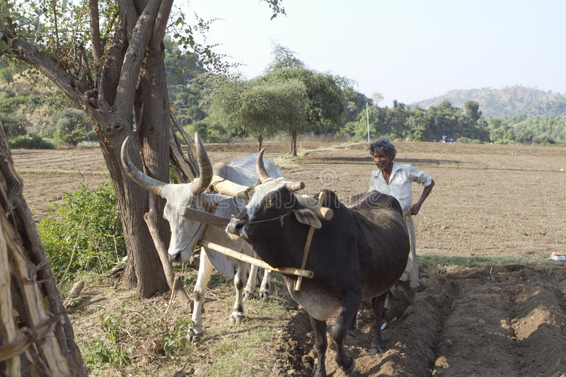 Agriculture indienne photographie stock