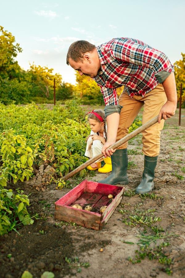 Agriculture, jardinage, agriculture et concept de personnes - jeune homme plantant des pommes de terre au jardin ou à la ferme photographie stock