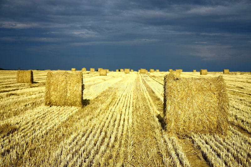 Download Agriculture Land With Straw Rolls Stock Image - Image: 6168957
