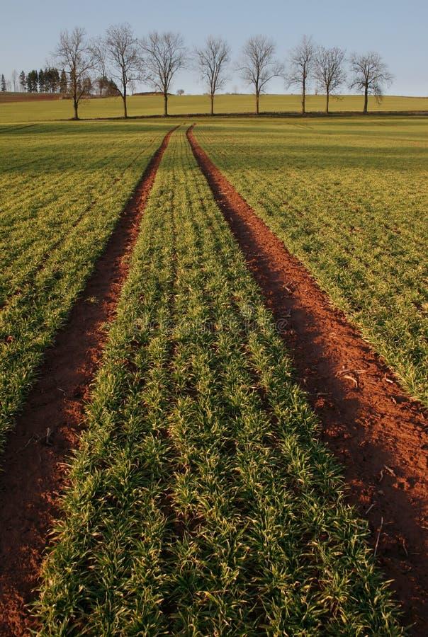 Free Agriculture Landscape Stock Image - 9022021