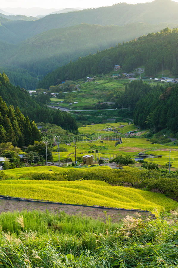 Agriculture landscape of Aichi prefecture. Rice paddy stock photography