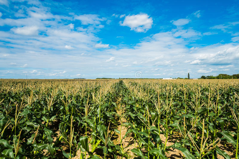 Download Agriculture stock photo. Image of farm, grass, growth - 35711012