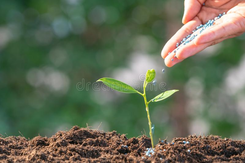 Agriculture / Nurturing baby plant / protect nature / planting t royalty free stock photo