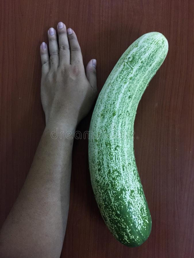 Comparison of cucumber and human hand stock photography