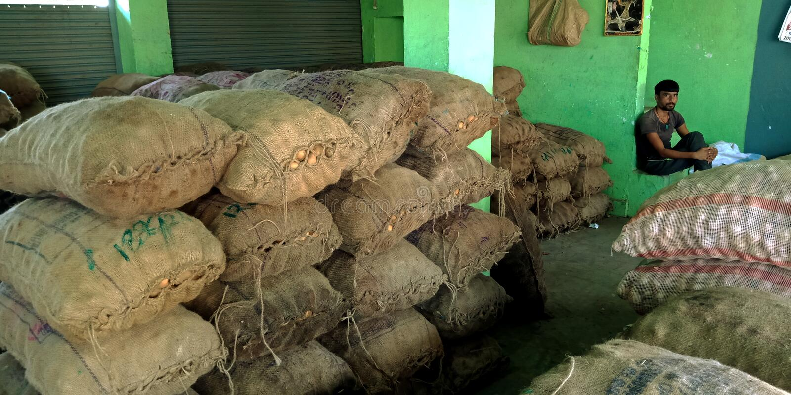 Agriculture produce potato wholesale store at Indian village farmers market. Vegetable, container, loaded, truck, crowd, goods, area, vendor, measuring royalty free stock image
