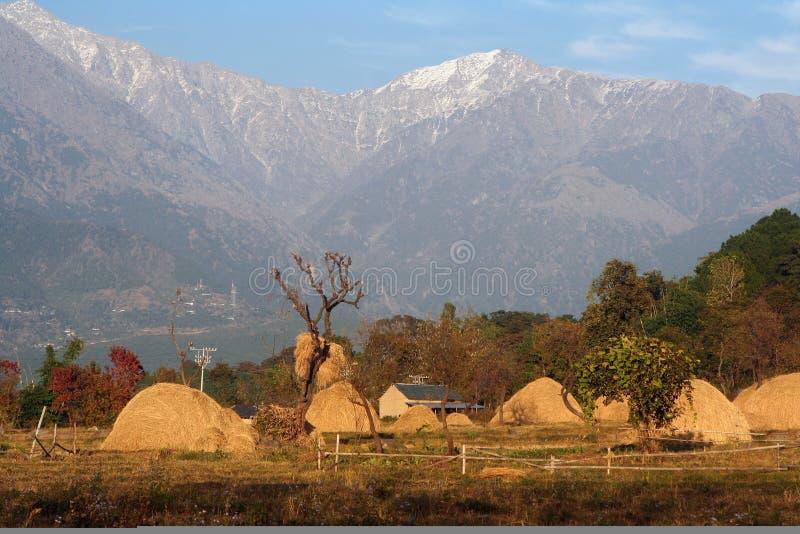 Agriculture rurale lointaine en Himalaya lointain Inde photos stock