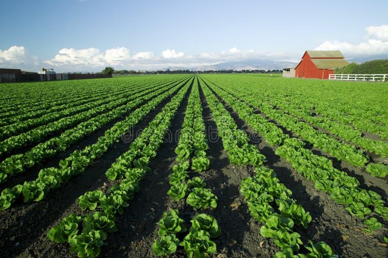 Agriculture scénique image stock