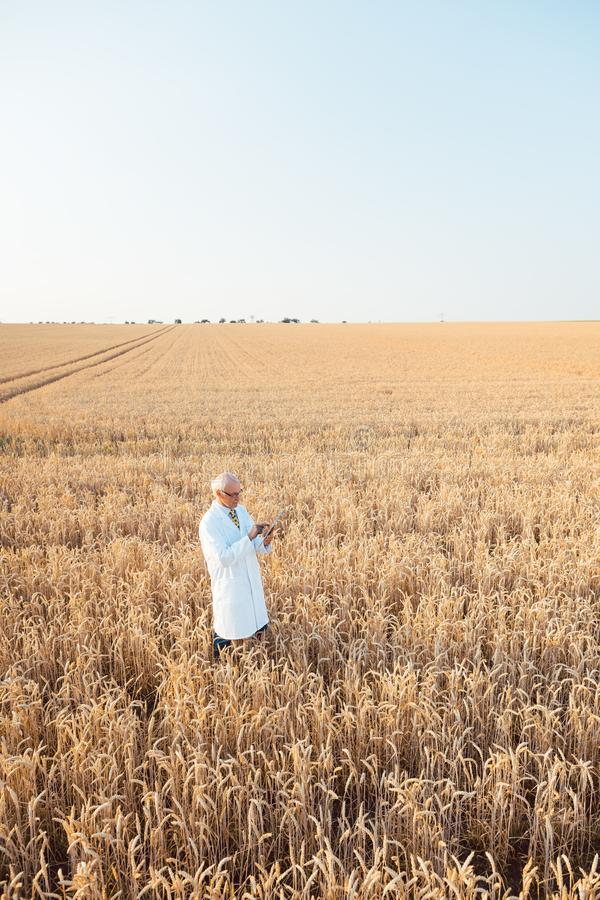 Agriculture scientist doing research in grain test field tracking data. Wide shot royalty free stock photo