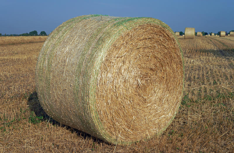 Download Agriculture stock image. Image of bound, round, bedding - 39505279