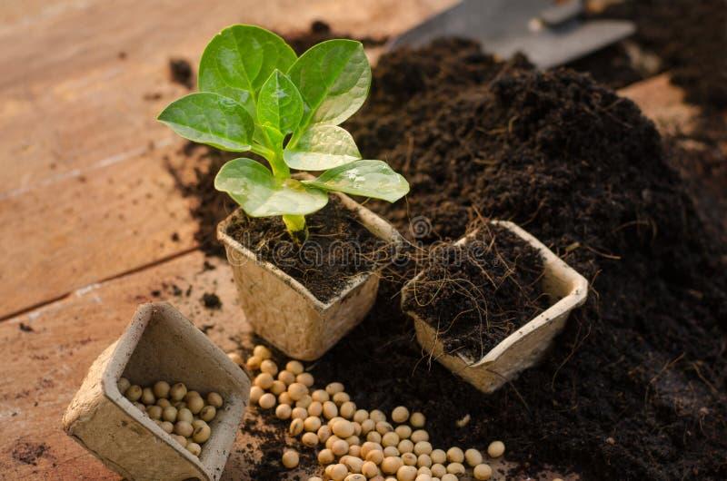 Agriculture, usine, graine, jeune plante, usine s'élevant sur le pot de papier photos libres de droits