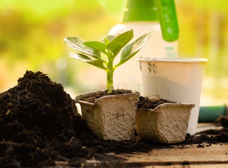 Agriculture, usine, graine, jeune plante, usine s'élevant sur le pot de papier image libre de droits