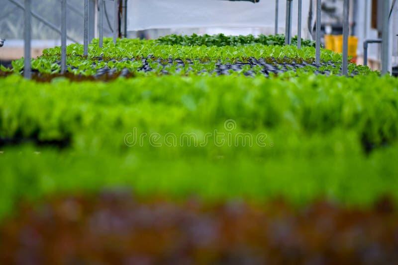 Agriculture verte organique de légumes images stock