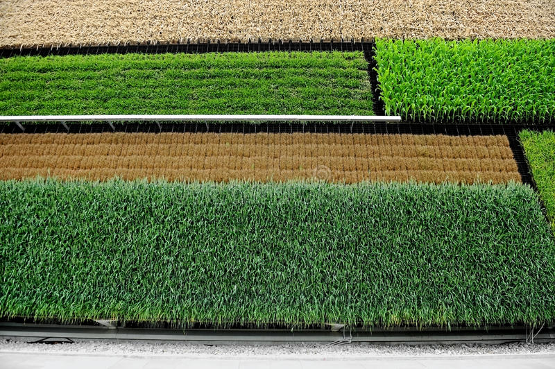 Agriculture verticale photos stock