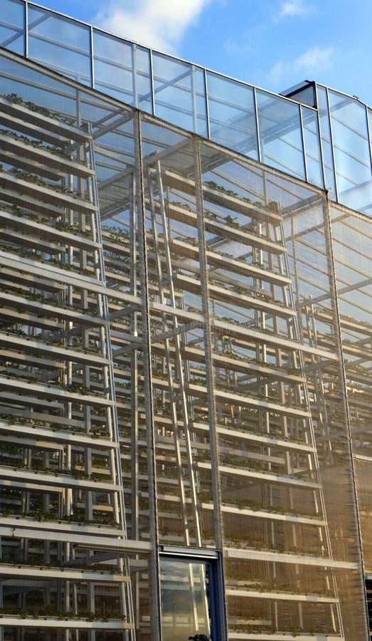Agriculture verticale, large échelle photo stock