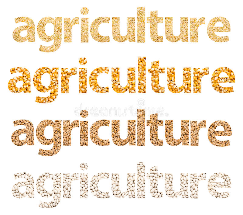 Agriculture Words Abstract Made Of Grains. Agriculture Words Abstract Isolated Made Of Different Grains: Wheat, Corn, Beans And Sesame vector illustration