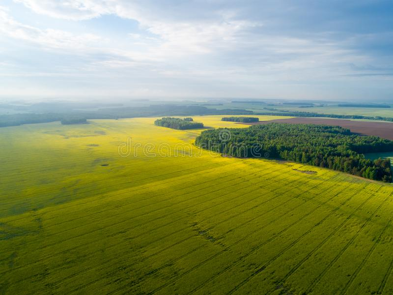 Agriculture yellow fields aerial view. Sunny day over fields. Aerial agricultural background. royalty free stock photos
