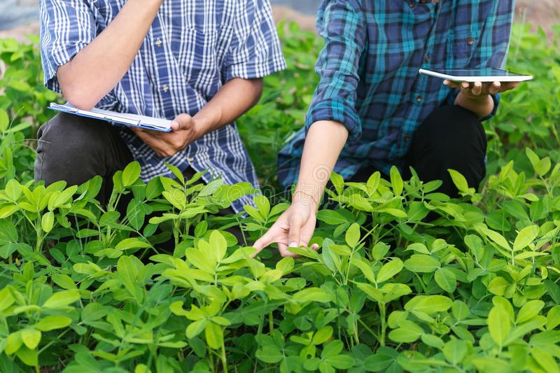 Agriculture Young men and women smart farmers inspecting plant organic. Field stock image