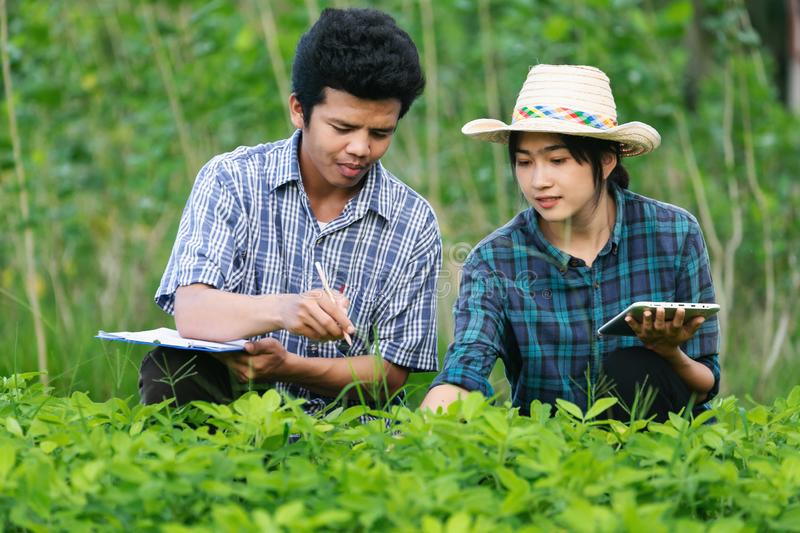 Agriculture Young men and women farmers inspecting plant organic field stock images