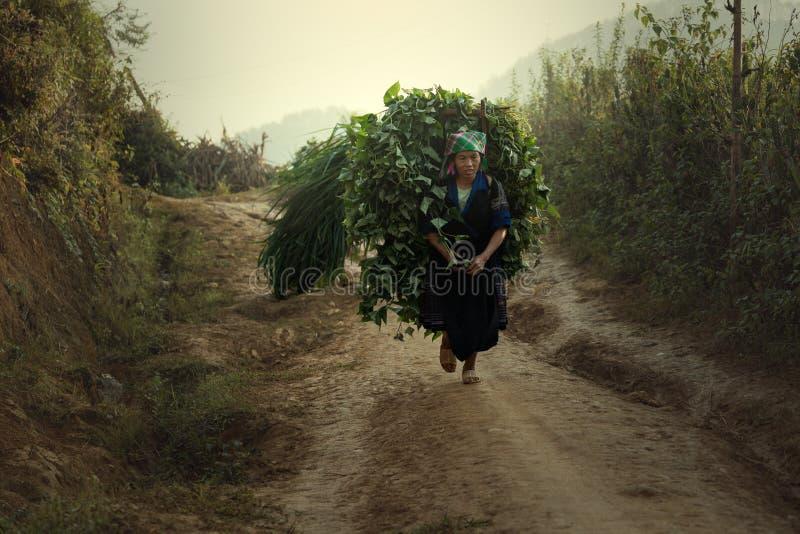 Agriculturist viet obraz royalty free
