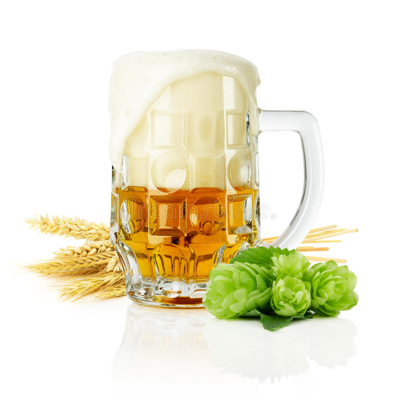 Agrida a cerveja fresca com os lúpulos verdes no fundo branco imagens de stock