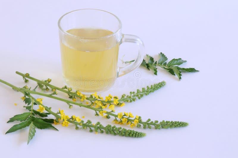 Agrimonia eupatoria, pospolity agrimony, kościelni steeples, sticklewort lub błonia agrimony herbata odizolowywający na bielu, obrazy royalty free