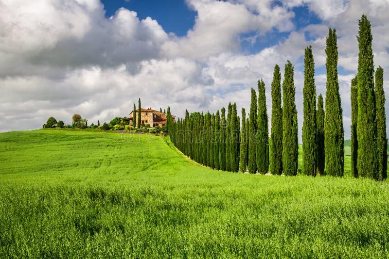 Agritourismus in Toskana mit Zypressen lizenzfreies stockbild