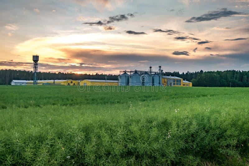 Agro-proceso de la planta para procesar y los silos para la limpieza en seco y el almacenamiento de productos agr?colas, de la ha fotografía de archivo libre de regalías