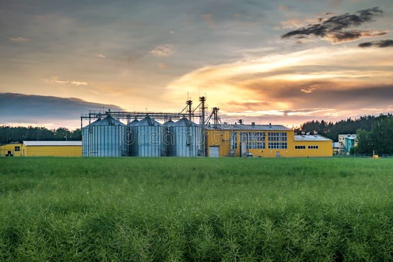Agro-proceso de la planta para procesar y los silos para la limpieza en seco y el almacenamiento de productos agr?colas, de la ha fotografía de archivo