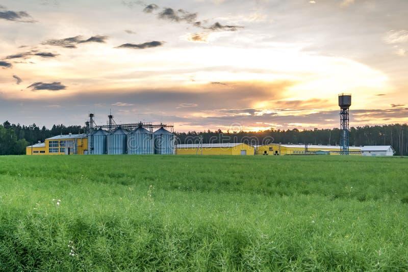 Agro-proceso de la planta para procesar y los silos para la limpieza en seco y el almacenamiento de productos agr?colas, de la ha imagen de archivo