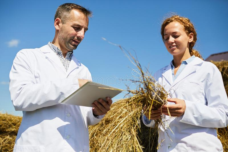 Agroengineers au travail photos stock