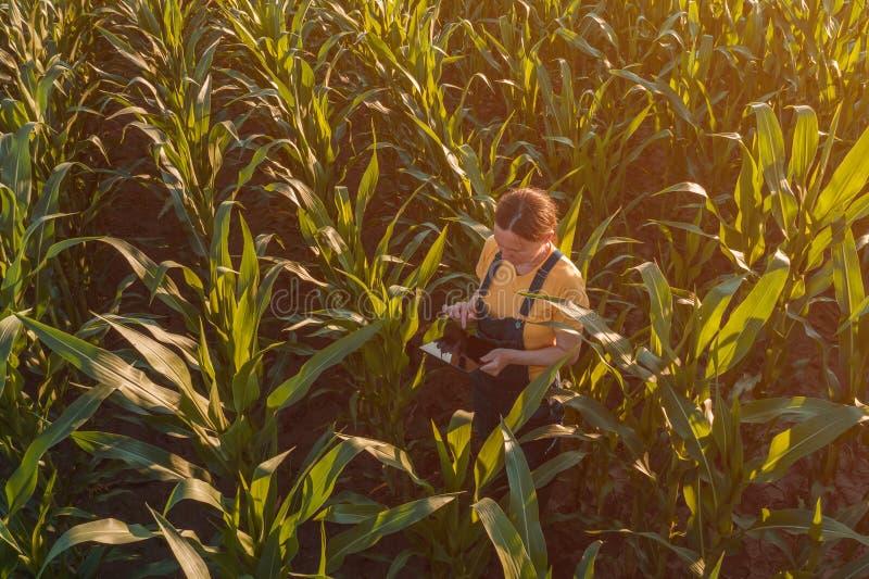 Agronom kobieta używa pastylka komputer w kukurydzanym polu zdjęcie royalty free