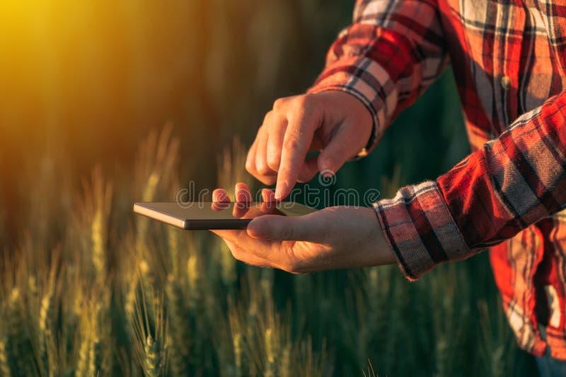 Agronom som använder den smarta telefonmobilen app för att analysera skörddevelopm royaltyfria bilder