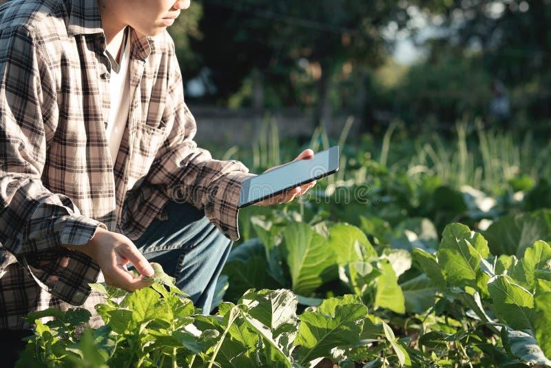 Agronom Używa pastylkę dla czyta obsiadanie w ag i raport obraz royalty free
