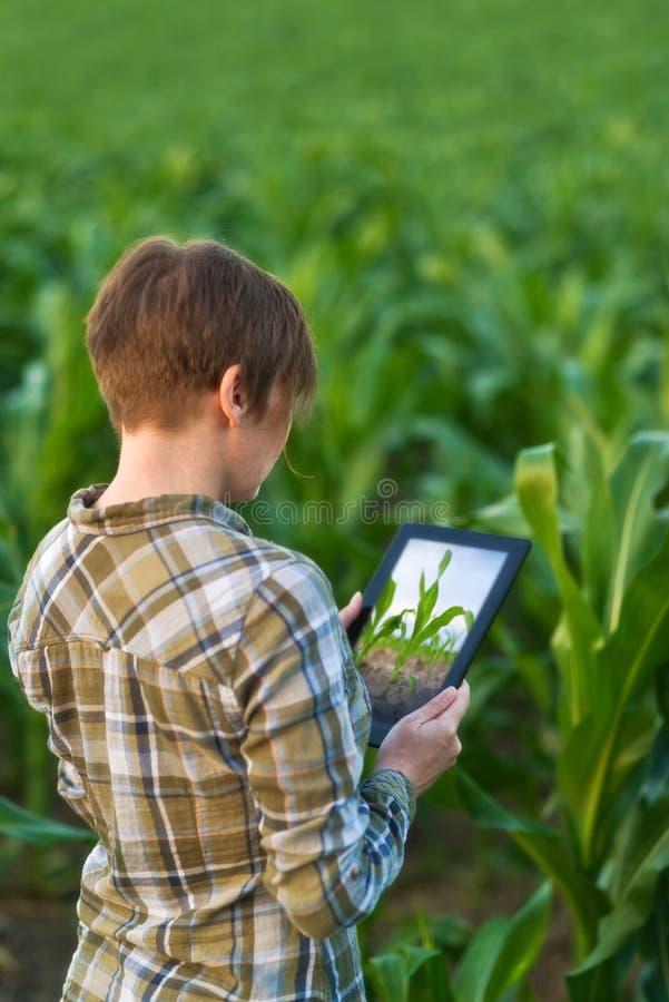 Agronom z pastylka komputerem w kukurydzanym polu obrazy royalty free