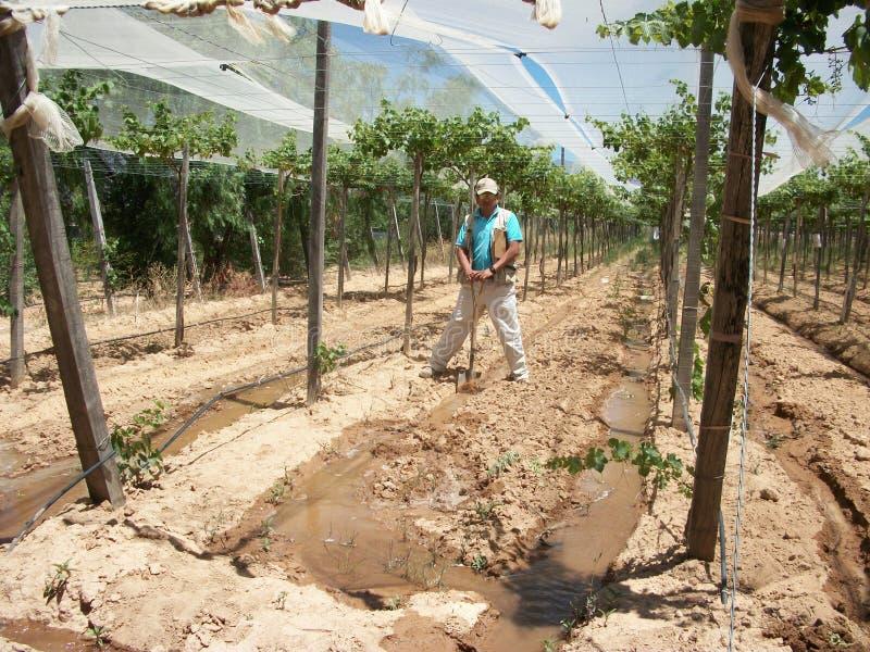 Agronome avec l'irrigation dans Viña photographie stock