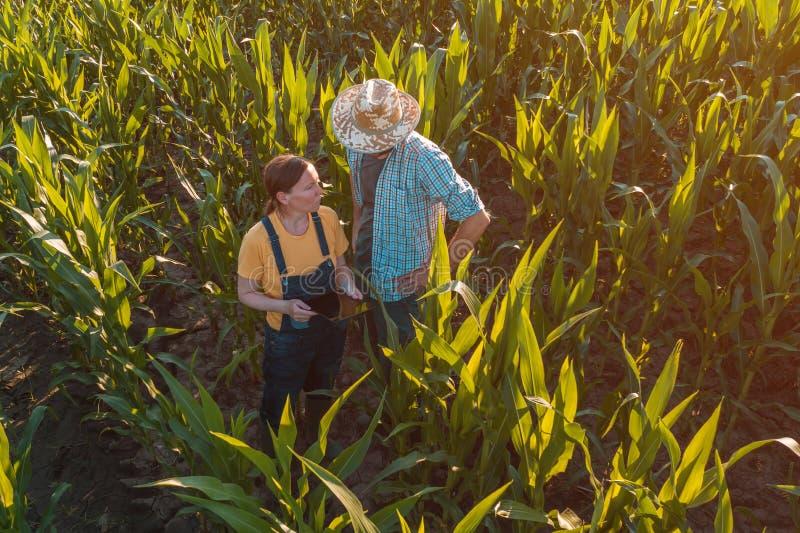 Agronome féminin conseillant l'agriculteur de maïs dans le domaine de culture photographie stock libre de droits