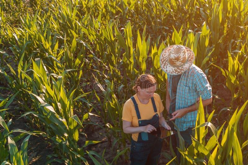 Agronome féminin conseillant l'agriculteur de maïs dans le domaine de culture images libres de droits