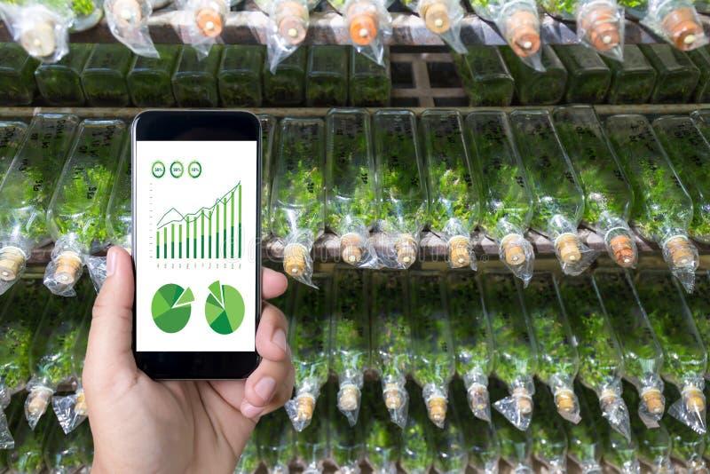 agronome Using d'homme de concept de technologie d'agriculture une Tablette dedans photo stock