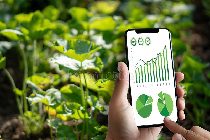agronome Using d'homme de concept de technologie d'agriculture une Tablette dedans image stock