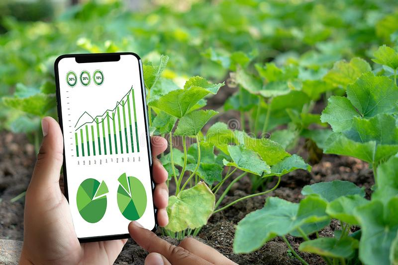 agronome Using d'homme de concept de technologie d'agriculture une Tablette dedans photographie stock