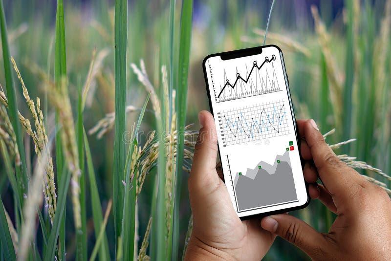 agronome Using d'homme de concept de technologie d'agriculture une Tablette dedans images stock