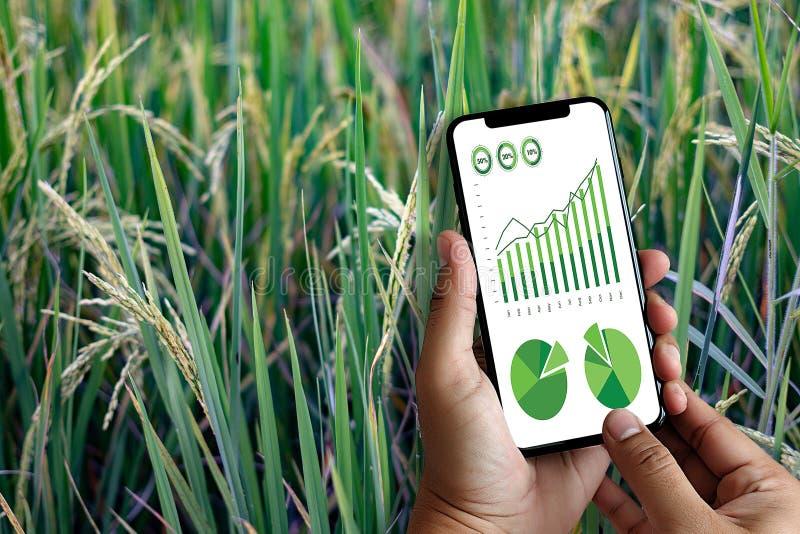 agronome Using d'homme de concept de technologie d'agriculture une Tablette dedans photos libres de droits