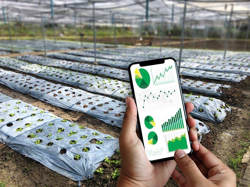agronome Using d'homme de concept de technologie d'agriculture une Tablette dedans image libre de droits