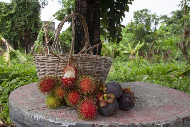 Agronomen skördade rambutan- och mangosteenfrukter i trädgården har en läcker söt smak royaltyfri foto