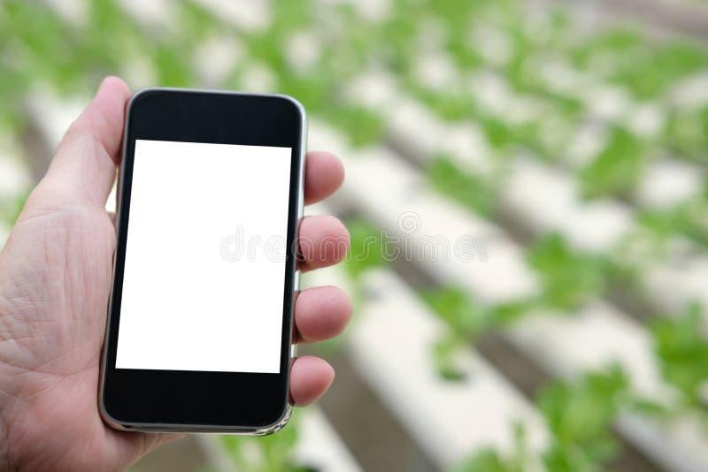 Agronomenlandwirt, der intelligentes Telefon verwendet, um EC, pH, temperatu zu überwachen stockfoto