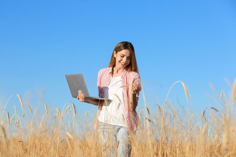 Agronomia con in campo di frumento Cereali fotografie stock libere da diritti