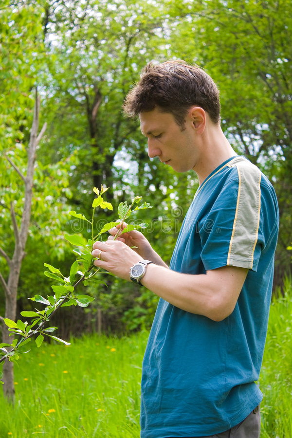 Agronomist. Young agronomist examining the trees in an orchard royalty free stock image