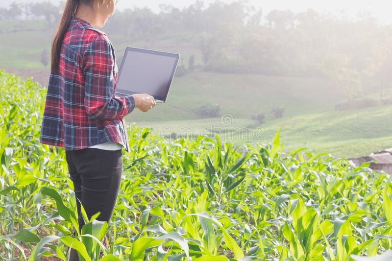Agronomist analyzing cereals with laptop computer. stock photo