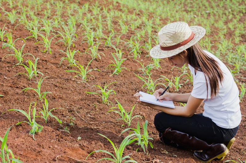 Woman Agronomist Laptop Corn Field Photos - Free & Royalty-Free Stock  Photos from Dreamstime